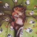 Pár poskytl domov opuštěnému mláděti veverky, to se zotavilo a stalo se členem rodiny - 60322