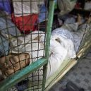 Klec jako domov – nedůstojné klaustrofobické bydlení nejchudších bohatého Hongkongu - hong-kong-cage-homes