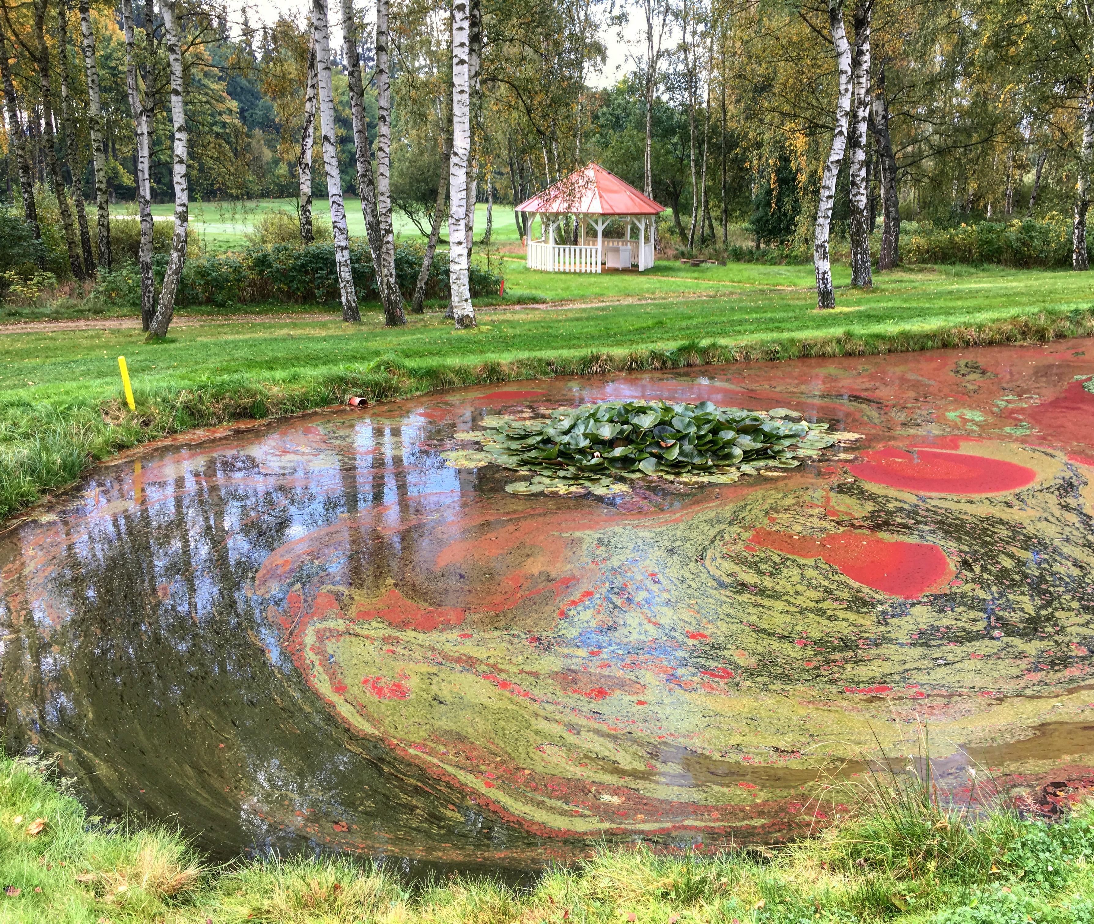 Řasami pestře zbarvené jezírko v horní části hřiště