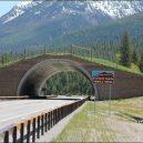 Prohlédněte si ty nejzajímavější ekodukty a mosty pro zvířata z celého světa - montana-usa-animal-bridge-wildlife-crossing-overpass