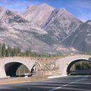 Prohlédněte si ty nejzajímavější ekodukty a mosty pro zvířata z celého světa - Wildlife-Crossing-Alberta