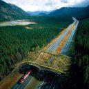 Prohlédněte si ty nejzajímavější ekodukty a mosty pro zvířata z celého světa - Wildlife-Crossing-Alberta-canada