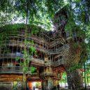 Obrovský stromový dům vyrůstal z mohutného dubu - da729e21cccee6fef423ff947dd075b6