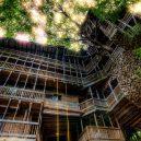 Obrovský stromový dům vyrůstal z mohutného dubu - GettyImages-170090960