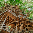 Obrovský stromový dům vyrůstal z mohutného dubu - HoraceBurgess_Featured