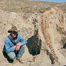 Tyranosaurus nepřežil zápas s rohatým triceratopsem. Scéna zamrzla v čase, fosilii našli ve smrtelném objetí - 1536