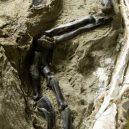 Tyranosaurus nepřežil zápas s rohatým triceratopsem. Scéna zamrzla v čase, fosilii našli ve smrtelném objetí - 2848