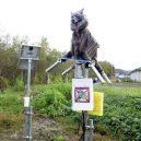 """Robotický """"Monster Wolf"""" straší japonské medvědy - c584e7749cab2d4dc892d4c10590dda4"""