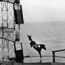 """Bizarní cirkusové představení """"diving horse"""" - diving-horses-12"""