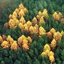 Německý les se svastikou není jediným svého druhu - forest-swastikas-1