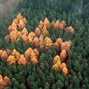 Německý les se svastikou není jediným svého druhu - nc_swastika_forest_ll_130705_16x9_992