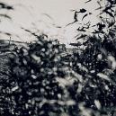"""Bizarní australská """"válka s emuy"""" z roku 1932 - iljk"""