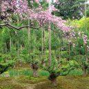 Magický lesní výjev – japonská lesnická technika daisugi - 1200px-Ryoan-ji_03