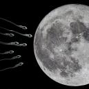 """Vědci plánují lunární """"Noemovu archu"""" - Bez názvu"""
