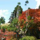 Magický lesní výjev – japonská lesnická technika daisugi - daisugi