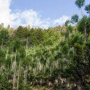 Magický lesní výjev – japonská lesnická technika daisugi - daisugi-3-1536×1021