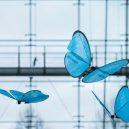 Robotická zvířata ze stáje společnosti Festo - http___cdn.cnn.com_cnnnext_dam_assets_180417130225-emotionbutterflies-atrium00065-v2-13×18-rgb