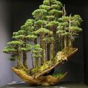 Magický lesní výjev – japonská lesnická technika daisugi - pqkk87jps8h61